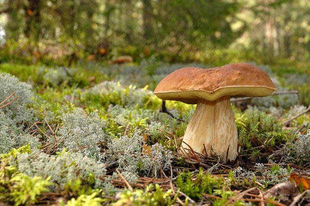 p-gde-baies-champignons